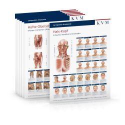 Set Lernposter Anatomie