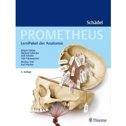 PROMETHEUS Lernpaket Schädel